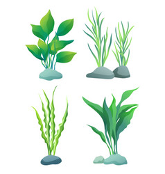 Seaweed or algae variegarion set vector