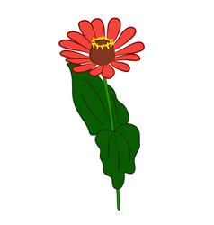 Zinnia flower vector