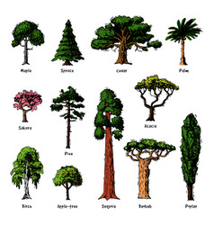 tree types green forest pine treetops vector image