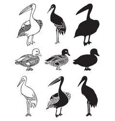 birds stork duck and pelican vector image
