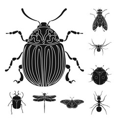 isolated object of insect and fly sign set of vector image