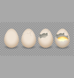 realistic cracked eggs vector image