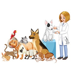 Vet and many injured animals vector