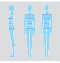 Women body measurements image vector