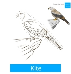 Kite bird learn birds coloring book vector image