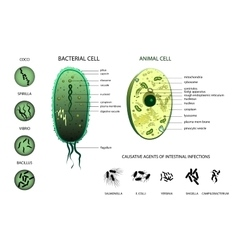 Microbiology Animal cell bacterium vector image