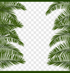 Summer green palm leaf transparent vector