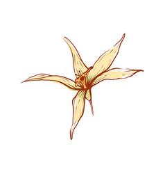 Asian vanilla flower isolated icon vector
