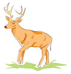 beautiful deer on white background vector image