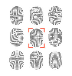 Fingerprints or fingertip print identification vector