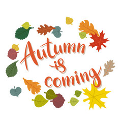 Inscription autumn is coming on white background vector