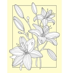 Lily flowers hand drawn vector