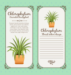 vintage label with chlorophytum plant vector image