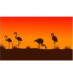 flamingo scenery at sunset silhouettes vector image