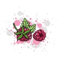 RaspberryStyle vector