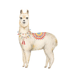 watercolor hand drawn card llama or alpaca vector image