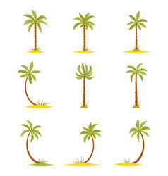 Set of colored palms in a flat style vector