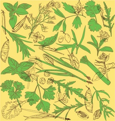 pattern with herbs vector image vector image