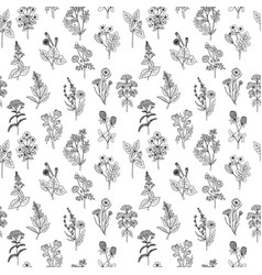 seamless pattern of various hand drawn herbs and vector image vector image