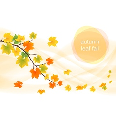 autumn leaves in the wind vector image