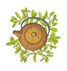 marjoram tea vector image