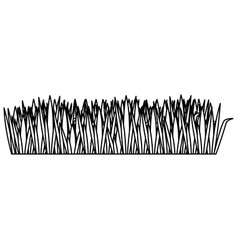 monochrome contour of field grass vector image