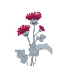 thistle or burdock flowers cartoon thistle vector image