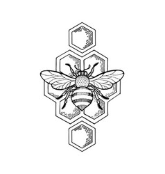 Bee and honeycombs engraving style vector