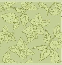 Peppermint seamless pattern vector