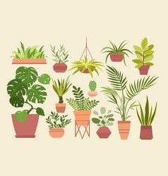 plant in pot set cartoon flat vector image