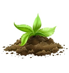 plant with green leaves vector image vector image