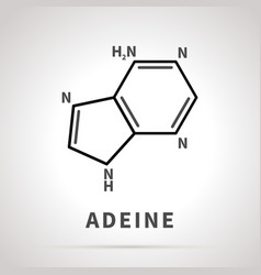 chemical structure adeine one four main vector image