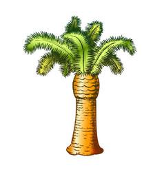 Palm coastline tropical tree color vector