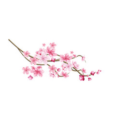 realistic sakura tree twig with pink petal vector image