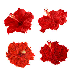 Red hibiscus corrugated tropical plant vintage vector