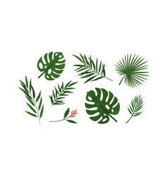 set different tropical green leaves or branches vector image