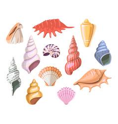 Shells of sea seashell and marine snail scallops vector