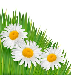 Nature background with beautiful flowers vector image