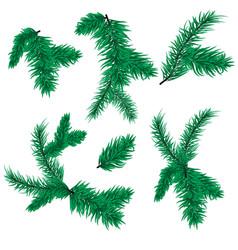 fir tree branch christmas spruce evergreen vector image