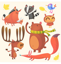 collection of cartoon forest animals images vector image