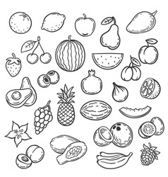 doodle fruits hand drawn outline berry apricot vector image