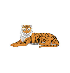 Lying bengal tiger isolated on white background vector