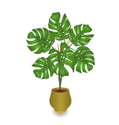 Philodendron tropical plant jungle leaves natural vector