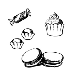 Sketch of cupcake macaron truffles and candy vector