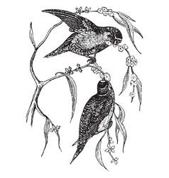 Swindern love birds vintage vector