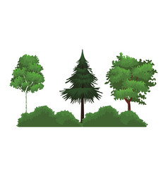 trees nature landscape vector image