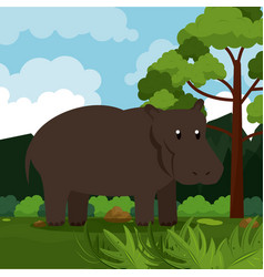 Hippo safari animal vector