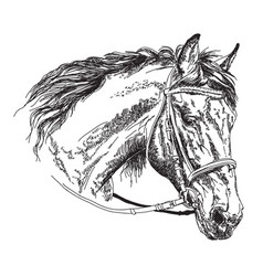 Horse head with bridle hand drawing vector