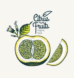 Orange hand drawn fruit vector