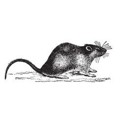 Rat vintage vector